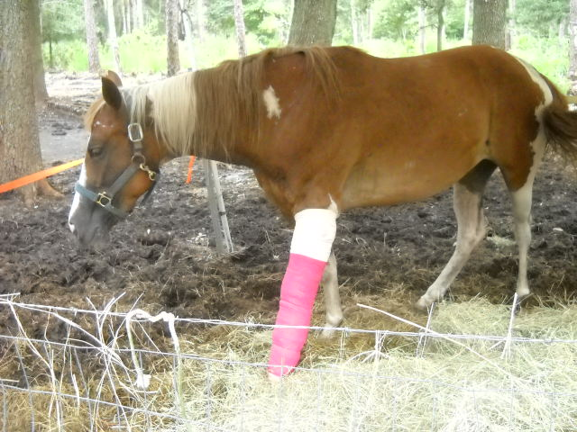 How To Care For An Wounded Horse